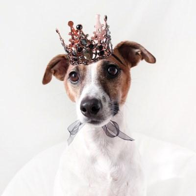 블랙 왕관 티아라 고양이 강아지 옷 모자 할로윈 코스튬 MIYOPET