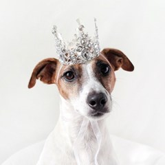 실버 왕관 티아라 고양이 강아지 옷 모자 할로윈 코스튬 MIYOPET