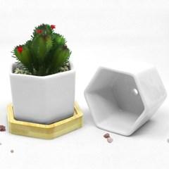 인테리어 식물화분 다육이 꽃 도자기 육각원목 흰색 화분