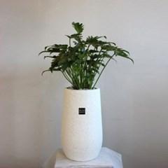 [브라더가든]파도처럼 물결치는 잎모양/공기정화식물 셀_(1360687)