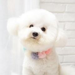 강아지생일 고양이케이프 핸드메이드 봉봉 케이프_(1278268)