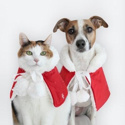 크리스마스 폼폼이 레드망토 고양이 강아지 산타옷 케이프 Miyopet