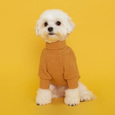 플로트 터틀넥니트 강아지옷 옐로우
