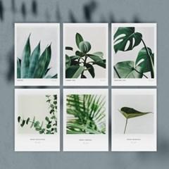 보테니컬 엽서 6개세트 / 미니 포스터 식물 액자,달력과 데코