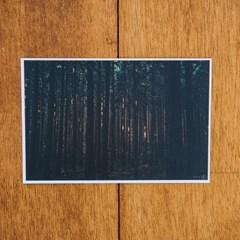 [손끝에서] 제주 놀멍쉬멍 사진엽서_사려니숲길