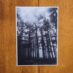[손끝에서] 제주 놀멍쉬멍 사진엽서_비내린후의숲