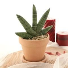 미세먼지정화식물 부채 스투키 이태리토분+토분받침대 SET