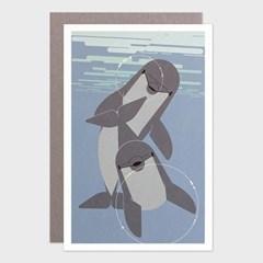 카드 / 114 병코돌고래