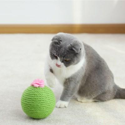 묘심 선인장볼 고양이 공장난감 캣닢볼