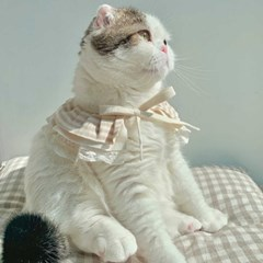 개달당 오가닉 3단 셔링 케이프 고양이케이프 강아지케이프