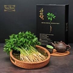 [남도장터]가온참뜰 새싹삼 100뿌리 (15-20cm)