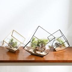 공기정화식물 틸란드시아 큐브 유리화분 세트 3종