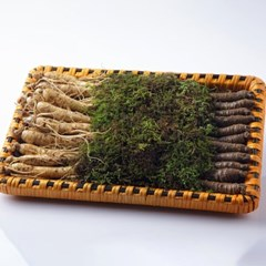 금산 울몸애 수삼더덕 선물세트 大 2kg(수삼700g+더덕13