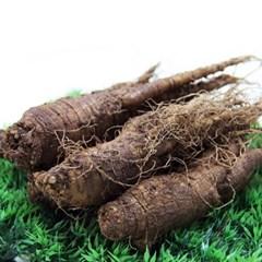 금산 울몸애 더덕(가정실속형)400g(10~15뿌리)