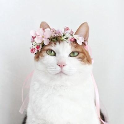핑크안개꽃 화관 머리띠 고양이 강아지 선물 설빔 악세사리 MIYOPET