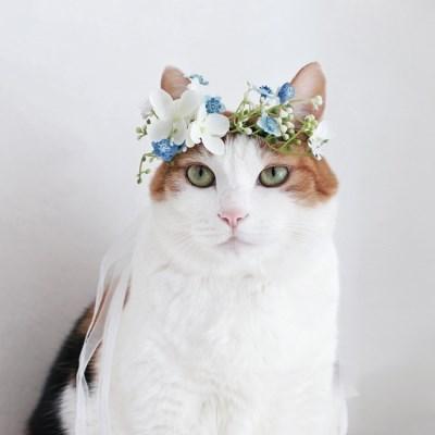 블루안개꽃 화관 머리띠 고양이 강아지 선물 설빔 악세사리 MIYOPET