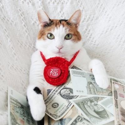 세배돈 용돈 복주머니 설빔 선물 고양이 강아지 목걸이 MIYOPET