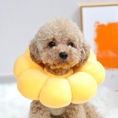 [파우파우] 해바라기 폼폼 강아지 넥카라