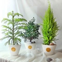 세가지 매력의 리얼 사철나무3종 中 택1 (중형) [전국택배]