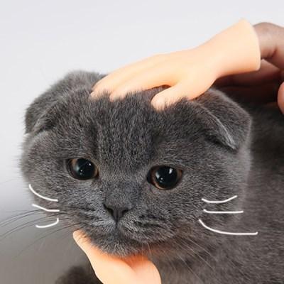 묘심견심 미니손 고양이 강아지 장난감