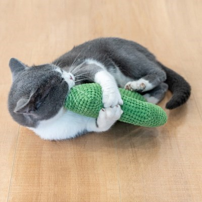 묘심 고양이장난감 캣닙 선인장인형