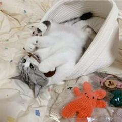 개달당 캣닢 마따따비 춥스 뜨개 막대사탕 고양이 캣닢 장난감