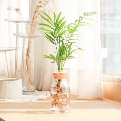 메이크정글 GLASSY NO.6 공기정화식물 유리병 수경화분_(234812)