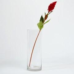 [모던하우스] 레드셀로니아 70cm