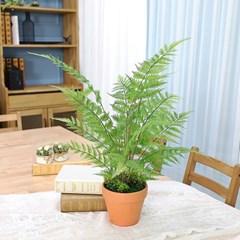 인테리어 인조나무 조화 화분 토분 루모라고사리 70cm_(2385982)