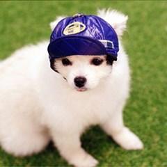 강아지 모자 애견 헌팅캡 반려견 악세사리 패션 블루