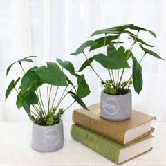 인조나무 인테리어 조화 화분 큐티 알로카시아 2p set_(2387051)