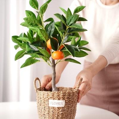 인조 감귤 유주 조화나무