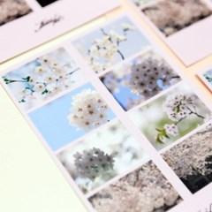 [제미포티] 사진 데코 스티커_Cherry Blossom