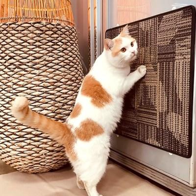 고양이놀이터 캣터 스크래쳐-캣타워 벽 바닥 사용가능