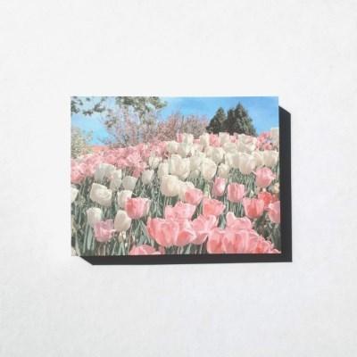 tulip festival 메모지