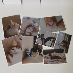 고양이 스티커 / Cat sticker vol.2