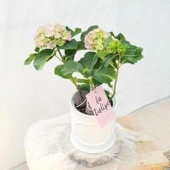 예쁜 꽃 소형 수국 화이트 몰딩화분