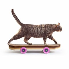 [썩유케이] 스케이트보드 고양이 장난감 캣 스크래쳐_(5878025)