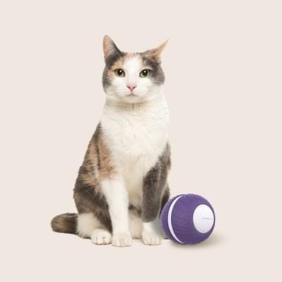 오엘라 고양이 자동 롤링볼