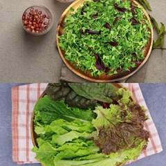 충주 유만종 농부 친환경 쌈채소 300g + 어린잎채소 300