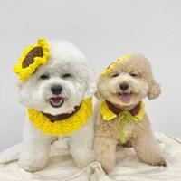 해바라기 케이프&모자 2종 SET _ 강아지 고양이케이프