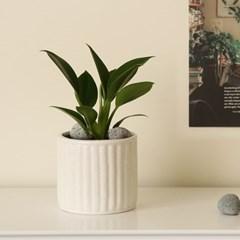 [plant] 콩고 화이트도자기 식물화분set_(941840)