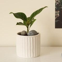 [plant] 뱅갈 고무나무 식물화분set_(941838)