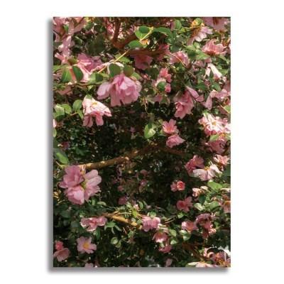 [크롭크롭] Camellia Poster #2 (A2)