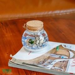 특별사은품  수경재배 반려식물 행운목 마리모 어항 항아리 DIY 선물