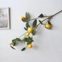 레몬 긴가지 조화