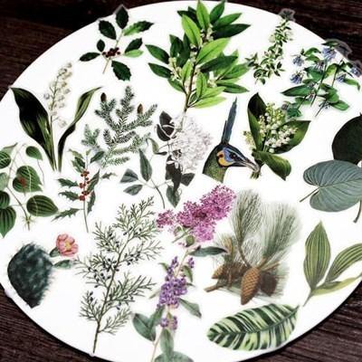 빈티지시리즈 02 식물 스티커팩 50조각