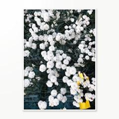 인테리어 액자 포스터 포토 플라워 flower rain 꽃비 01