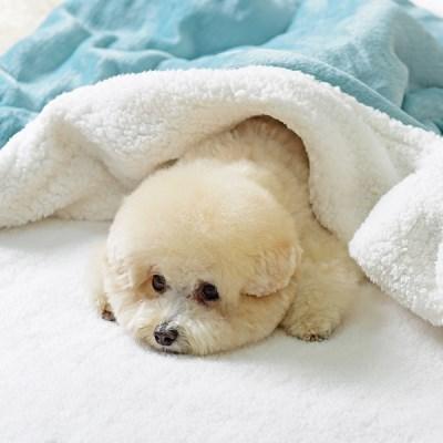[펫츠랜드] 강아지이불 더블 플란넬 강아지이불/ 담요