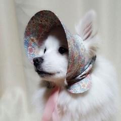 봄다발 바나썬캡 강아지 고양이 썬캡 모자 아소비진